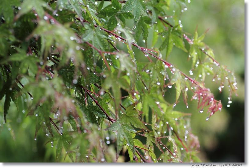 雨模様_c0054876_18183953.jpg