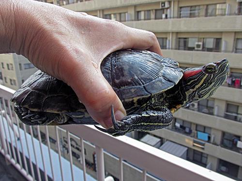 世界カメの日 World Turtle Day_a0188487_23535614.jpg