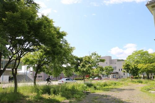 風が薫る朝の米沢キャンパス、5月31日(小満・末候)麦の秋至る・・・1_c0075701_11161046.jpg