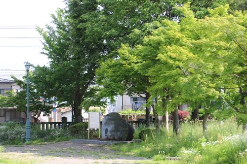 風が薫る朝の米沢キャンパス、5月31日(小満・末候)麦の秋至る・・・1_c0075701_11223655.jpg