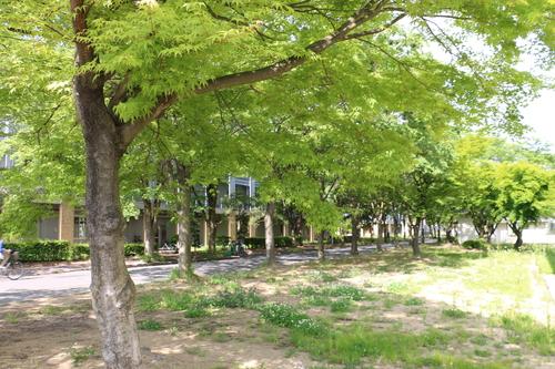 風が薫る朝の米沢キャンパス、5月31日(小満・末候)麦の秋至る・・・1_c0075701_11224076.jpg