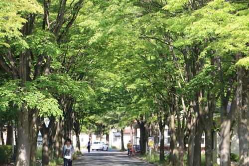 風が薫る朝の米沢キャンパス、5月31日(小満・末候)麦の秋至る・・・1_c0075701_11224280.jpg