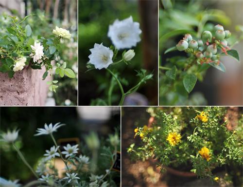 ガーデン日和_d0174704_21183392.jpg