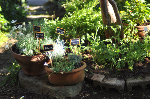 ガーデン日和_d0174704_21272052.jpg