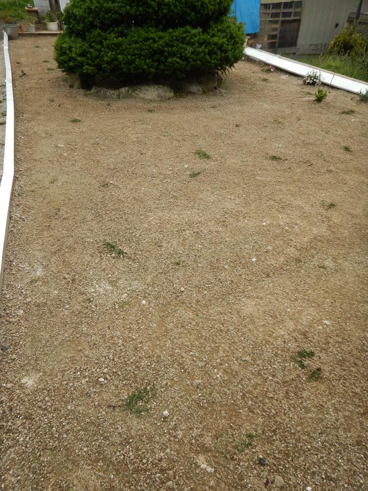庭は花盛り_c0111229_18101866.jpg