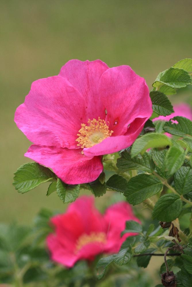 庭は花盛り_c0111229_1810364.jpg
