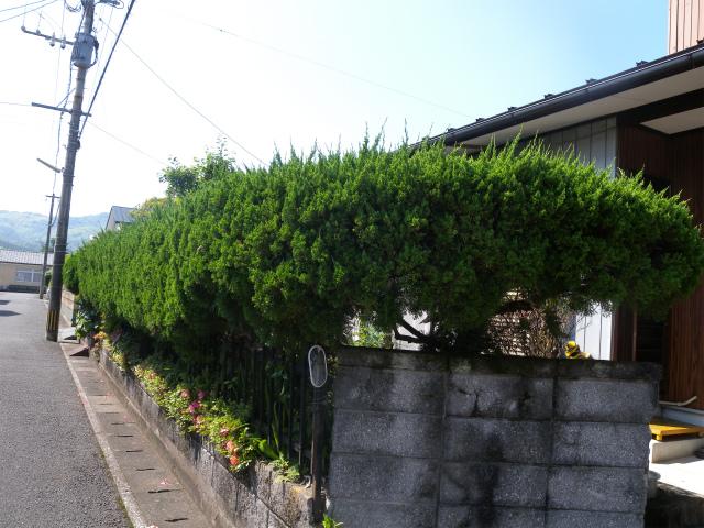 庭木の剪定作業!_e0272335_19343691.jpg