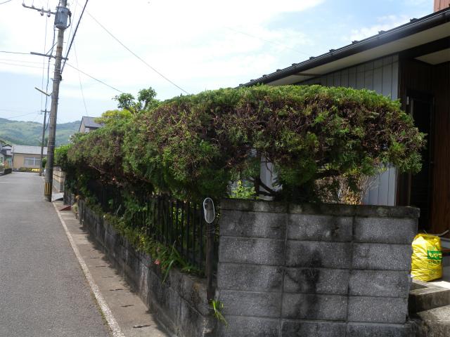 庭木の剪定作業!_e0272335_193585.jpg