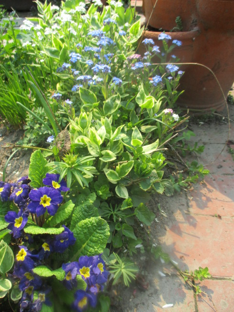 お庭でメニューの研究_a0279743_6194825.jpg