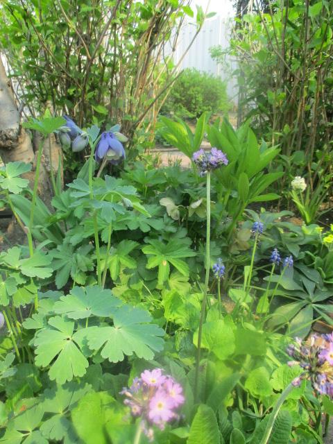 お庭でメニューの研究_a0279743_620176.jpg