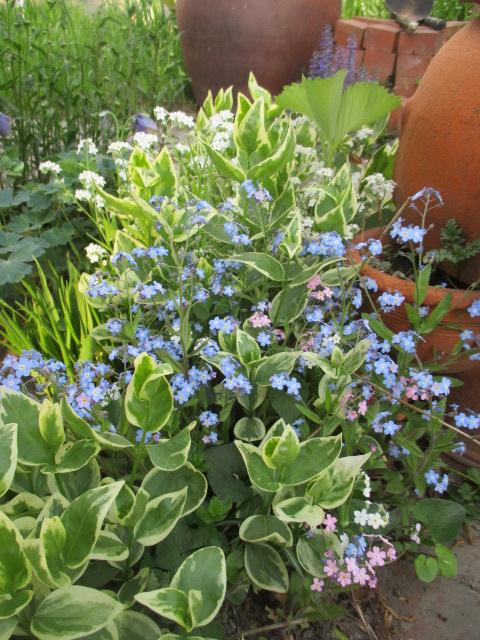お庭でメニューの研究_a0279743_6205421.jpg