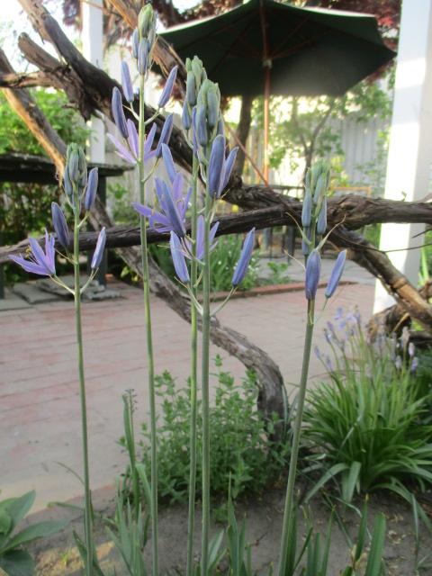 お庭でメニューの研究_a0279743_6221647.jpg