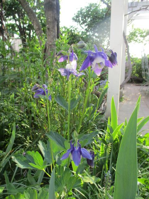 お庭でメニューの研究_a0279743_6232131.jpg