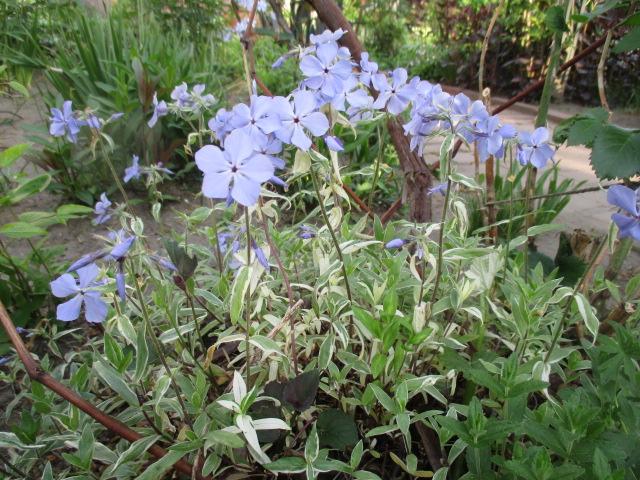 お庭でメニューの研究_a0279743_6284319.jpg