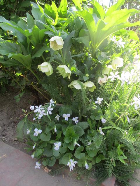 お庭でメニューの研究_a0279743_6293071.jpg