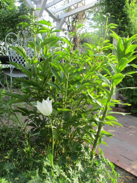 お庭でメニューの研究_a0279743_629415.jpg