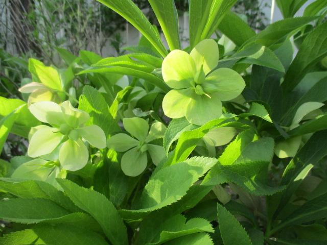 お庭でメニューの研究_a0279743_6302467.jpg