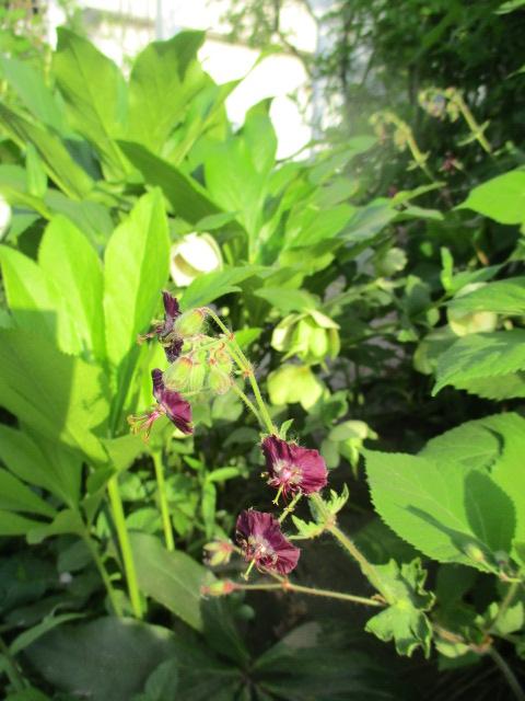 お庭でメニューの研究_a0279743_6314481.jpg