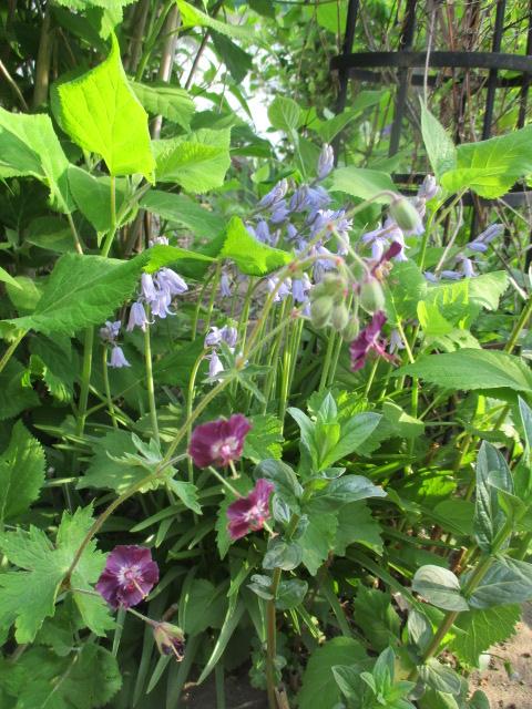 お庭でメニューの研究_a0279743_6315874.jpg