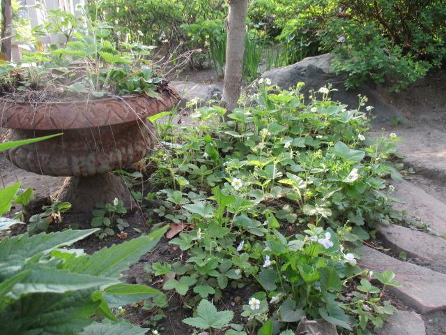 お庭でメニューの研究_a0279743_6324619.jpg