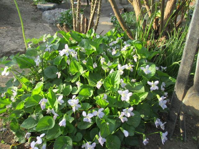 お庭でメニューの研究_a0279743_6332933.jpg