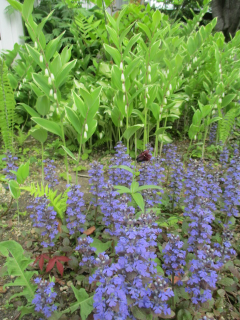 お庭でメニューの研究_a0279743_6342660.jpg