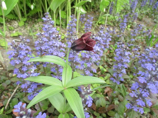 お庭でメニューの研究_a0279743_6372015.jpg