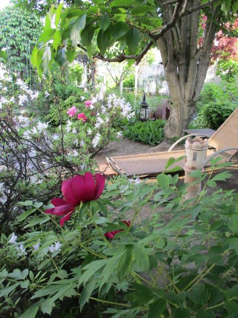 お庭でメニューの研究_a0279743_6562420.jpg