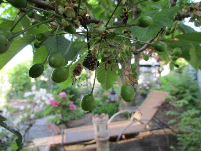 お庭でメニューの研究_a0279743_6572516.jpg