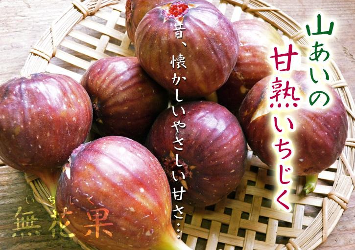 甘熟いちじく 着果の様子と副梢の話_a0254656_1756969.jpg