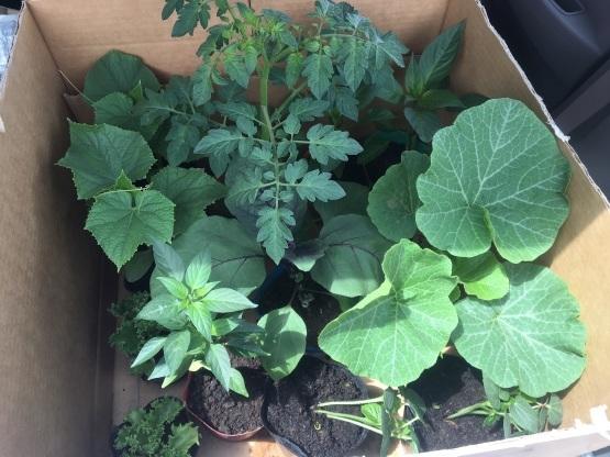 野菜の苗にも人気がある_a0356060_14591061.jpg