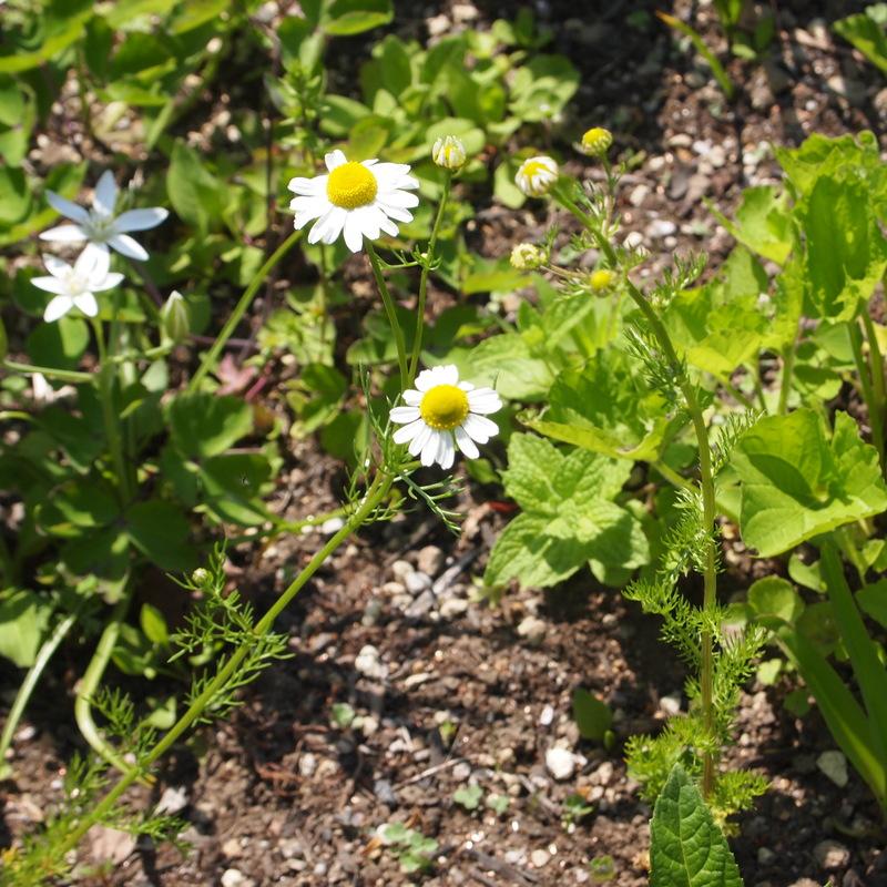 6月の園芸実習の募集です_a0292194_2302629.jpg