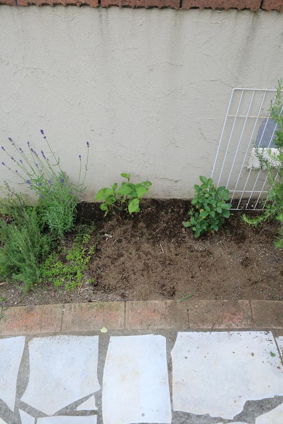 花壇の植え替え♪_b0275998_1072084.jpg