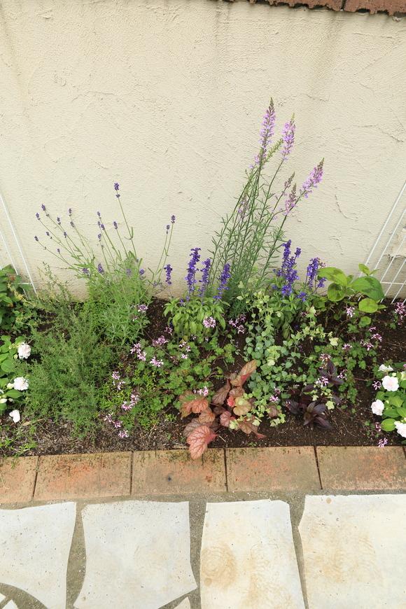 花壇の植え替え♪_b0275998_1082269.jpg