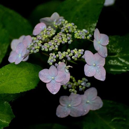 初夏の花_f0099102_14373452.jpg