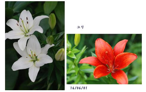 6月になって_c0051105_2340315.jpg
