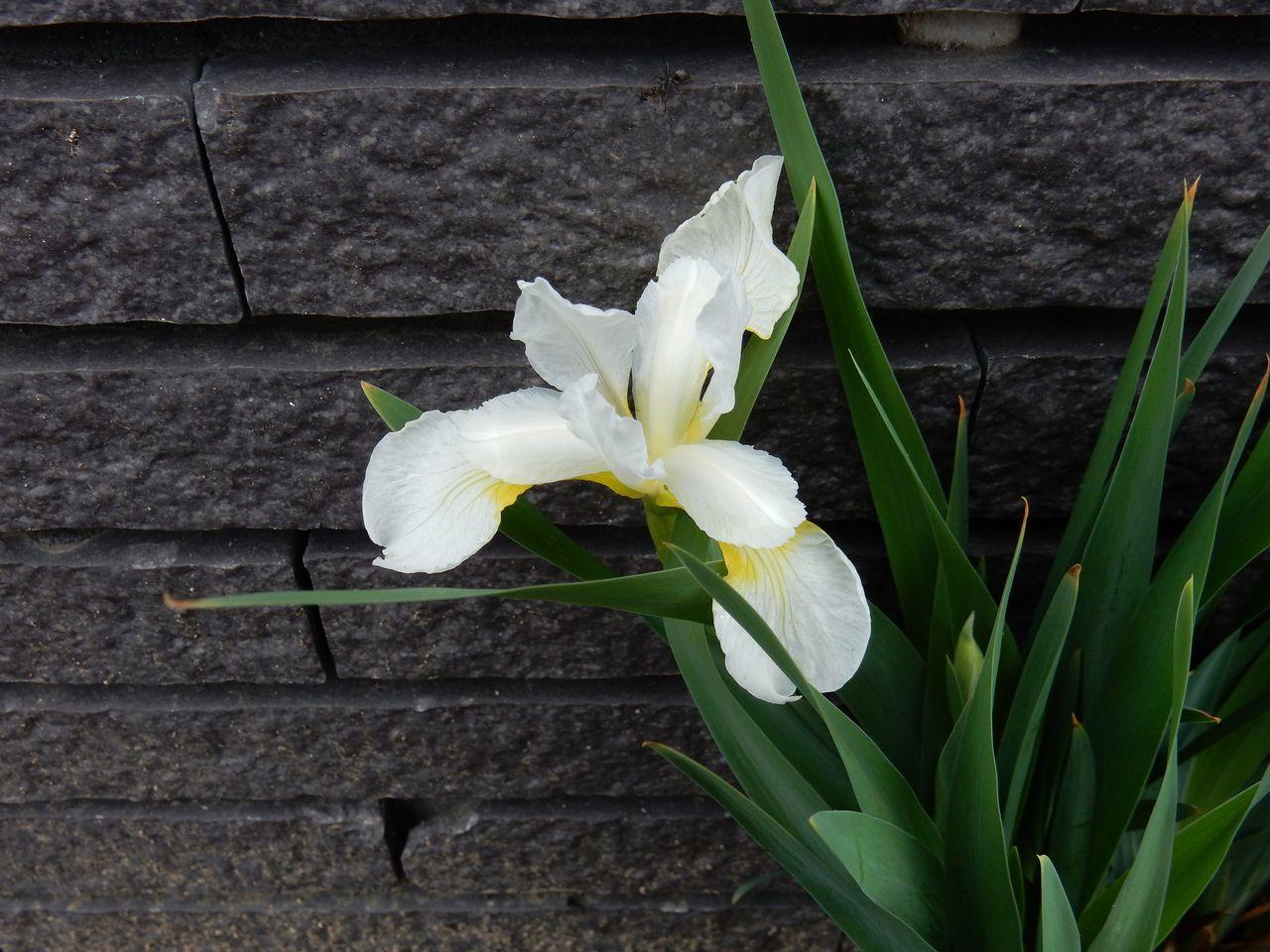 寒くても花は咲く_c0025115_22425683.jpg