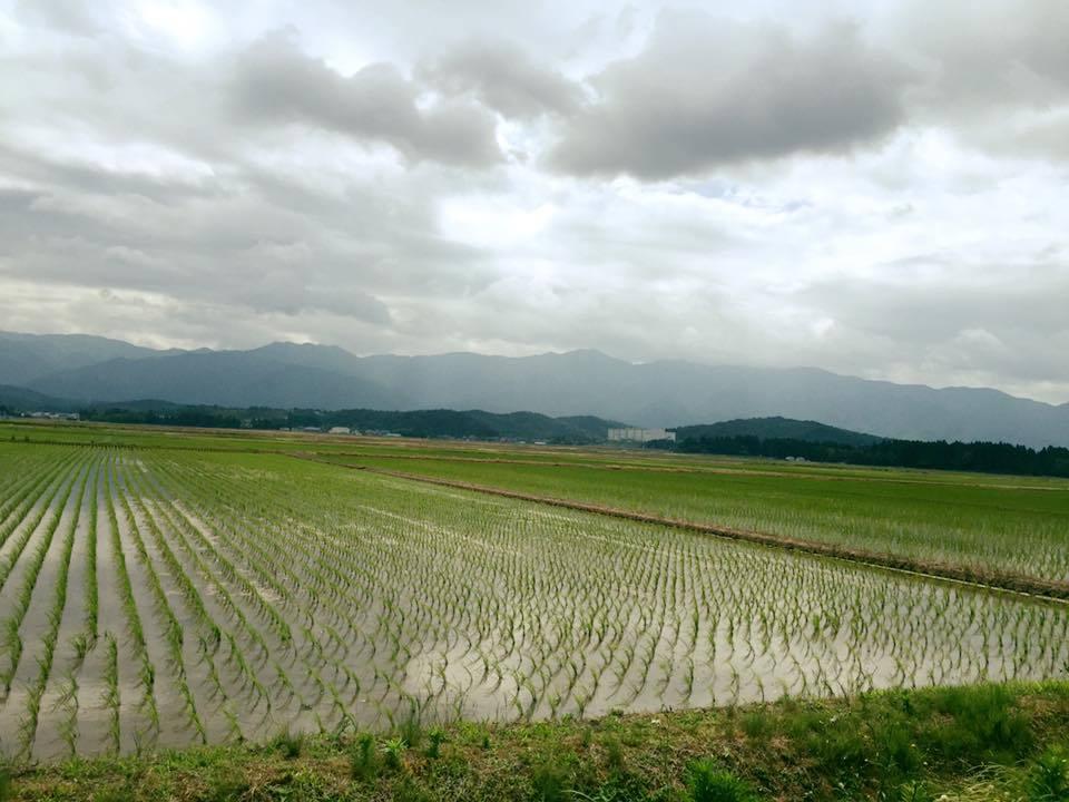阿賀野市に導かれて〜花と緑の60日間〜_a0126418_18171791.jpg