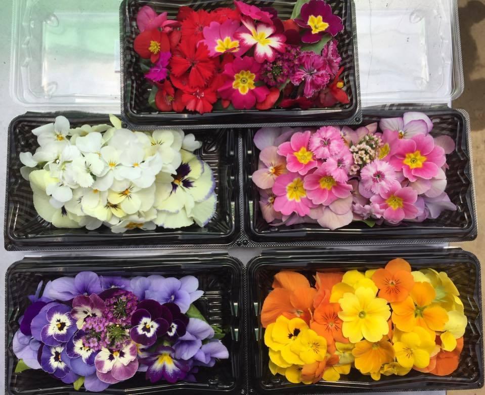 阿賀野市に導かれて〜花と緑の60日間〜_a0126418_18181617.jpg