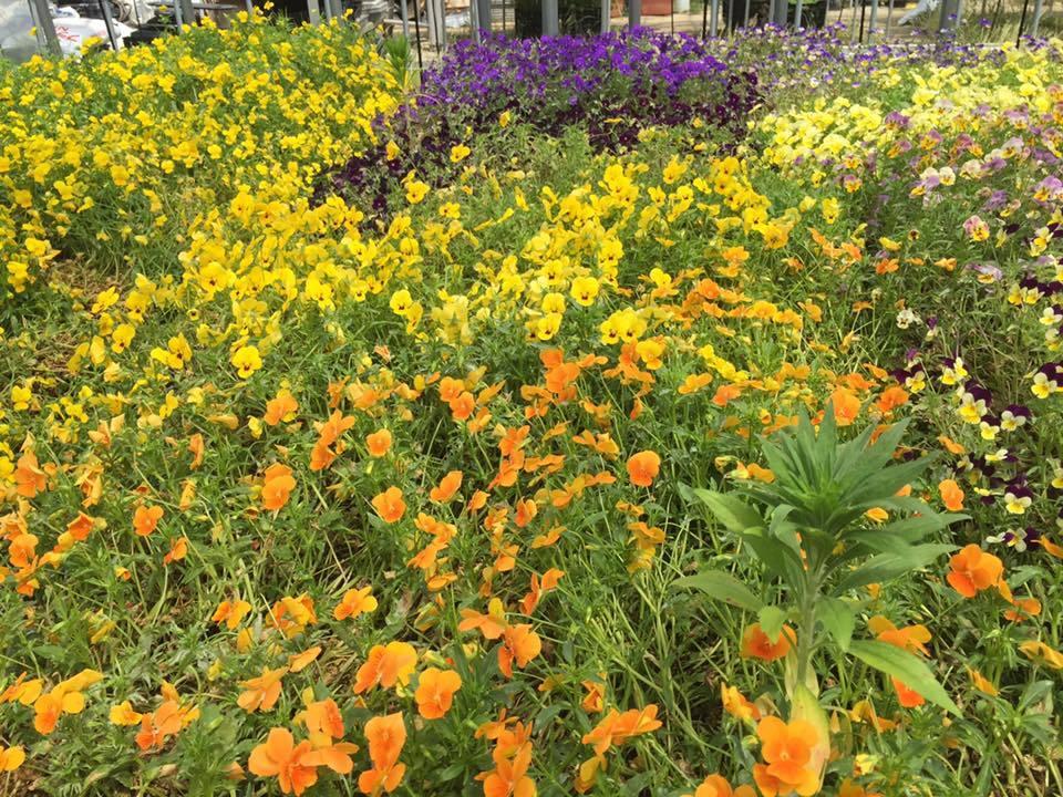阿賀野市に導かれて〜花と緑の60日間〜_a0126418_18183172.jpg