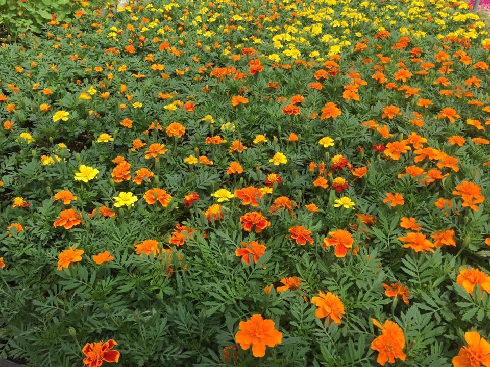 阿賀野市に導かれて〜花と緑の60日間〜_a0126418_18190710.jpg