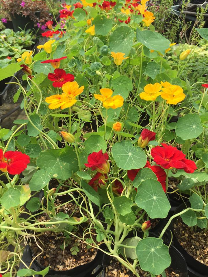阿賀野市に導かれて〜花と緑の60日間〜_a0126418_18191846.jpg