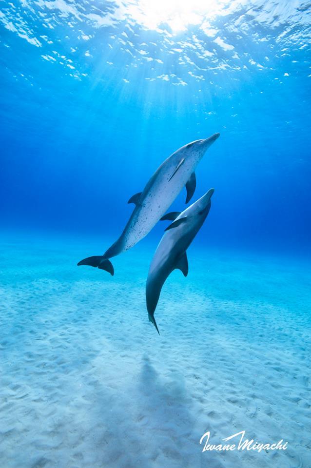 海の日開催!話題の無人島「JEEP島写真展」~宮地岩根~_c0221922_10355257.jpg