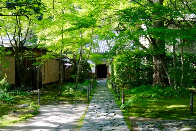 【蓮華寺】京都旅行 - 9 -_f0348831_06453621.jpg