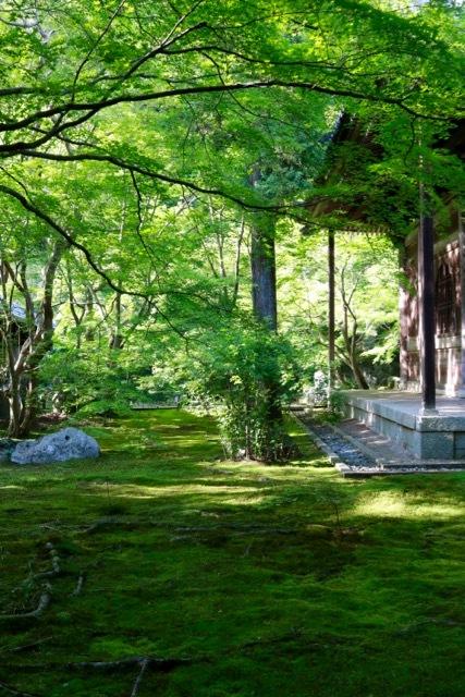 【蓮華寺】京都旅行 - 9 -_f0348831_06461471.jpg
