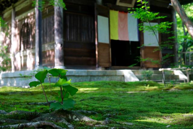 【蓮華寺】京都旅行 - 9 -_f0348831_06461483.jpg