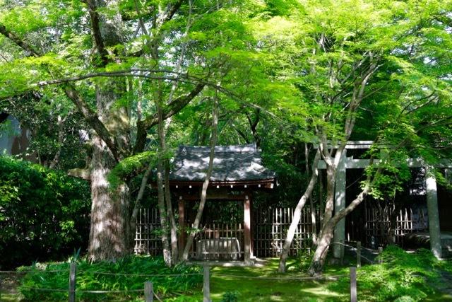【蓮華寺】京都旅行 - 9 -_f0348831_07034645.jpg