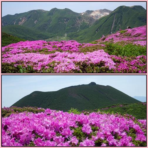 ミヤマキリシマ・平治岳_e0164643_21471299.jpg