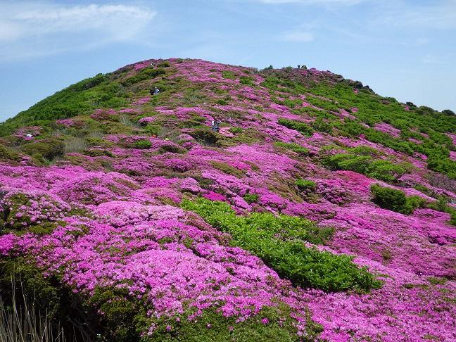 ミヤマキリシマ・平治岳_e0164643_2150094.jpg