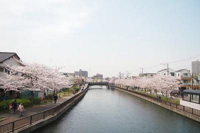 桜2016最後_b0017559_2242429.jpg